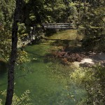 Magnifique petit pont dans la forêt
