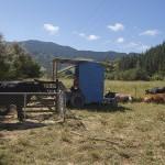 La station de traite des vaches