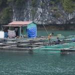 Pêcheur de la Baie de Ha Long