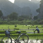 Coucher de soleil sur la rizière 2