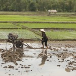 Travailleuse dans la rizière 2