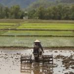 Travailleuse dans la rizière 3