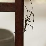 Une petite araignée