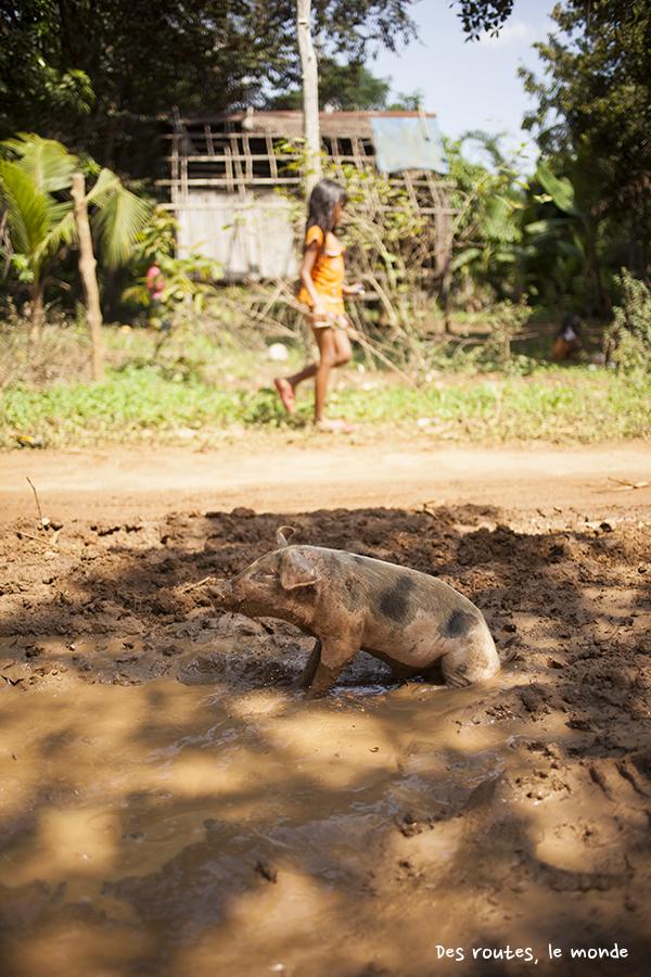 Supplément cochon