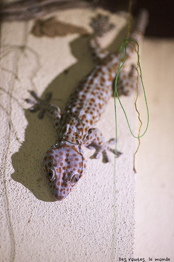 Mister Gecko