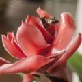 Une grenouille cachée