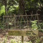 Le jardin Gecko