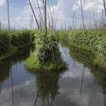 Les jardins flottants