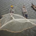 Toujours du poisson