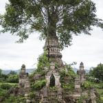 Un arbre dans un stupa