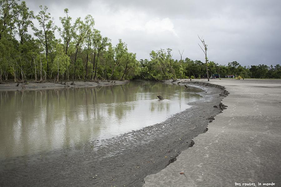 La mangrove