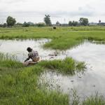 Retour à travers les rizières 2