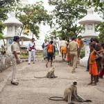 Des singes sur la route de la stupa