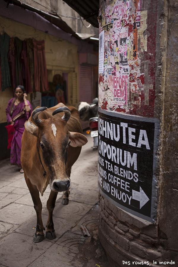Une vache dans la rue