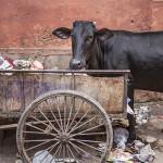 Abreuvoir d'ordures