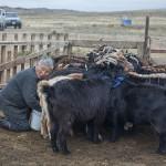 A la mongole