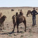 Les bébés chameaux et le baby-sitter