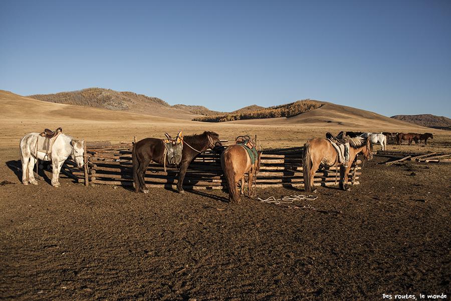 Tous nos chevaux