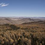 La forêt et la vallée